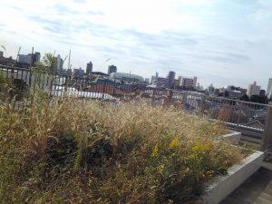 阿佐ヶ谷福祉工房の屋上には畑も。